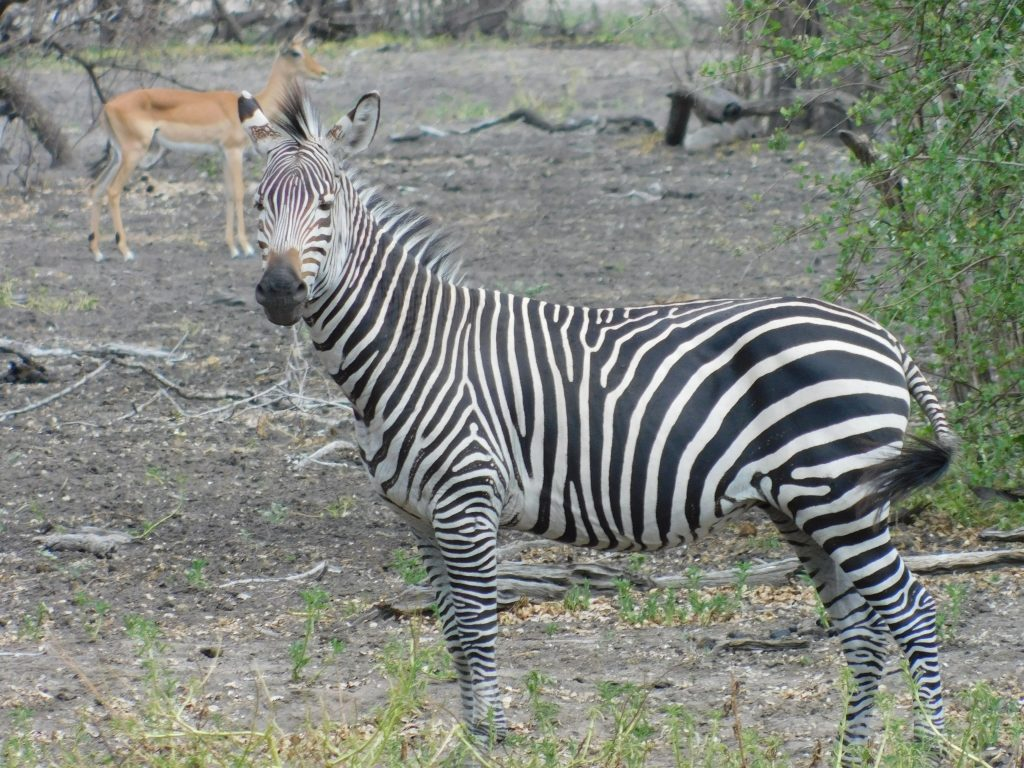 Selous Game Reserve Safari Tanzania