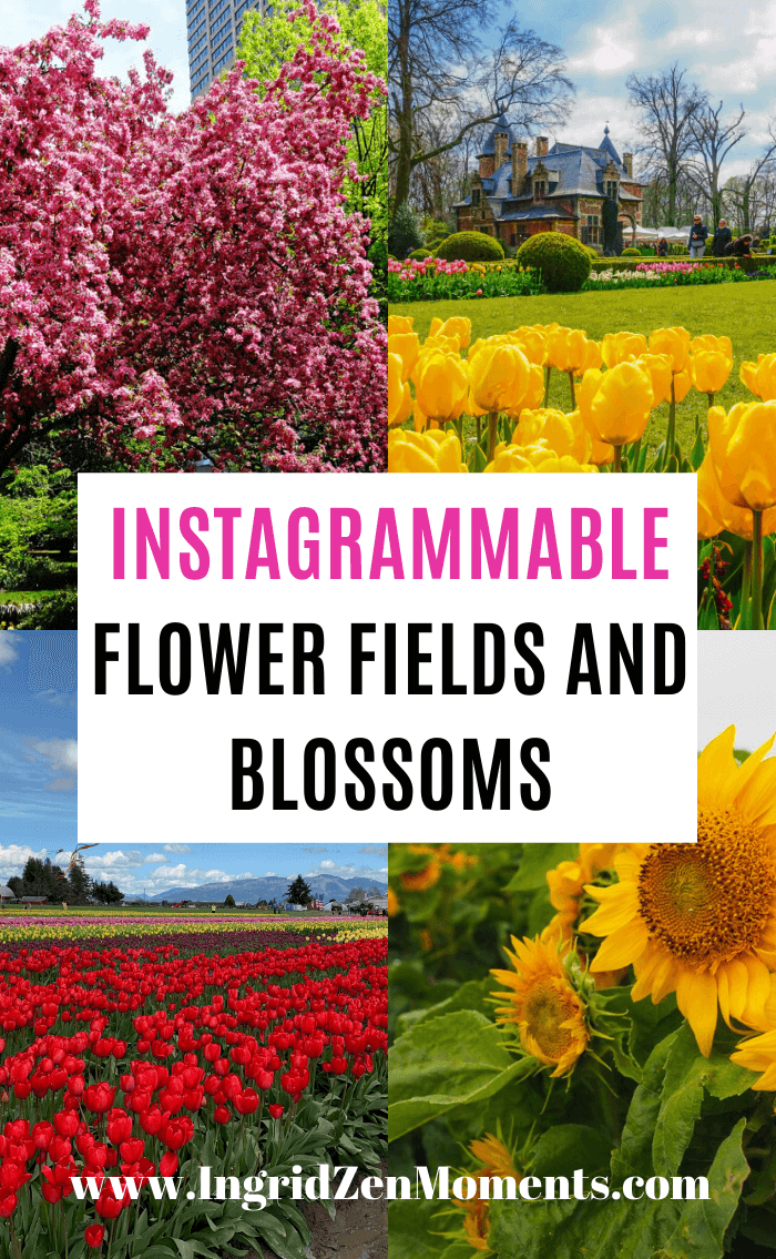 INSTAGRAMMBLE FLOWER FIELDS AND BLOSSOMS